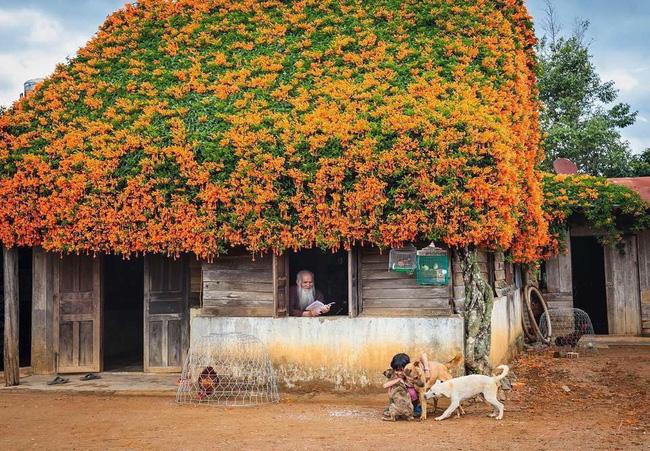 Hội chị em phát sốt đòi kéo nhau đi Lâm Đồng check in ở ngôi nhà phủ đầy hoa da cam như truyện cổ tích, từng lên cả báo Mỹ - Ảnh 3.