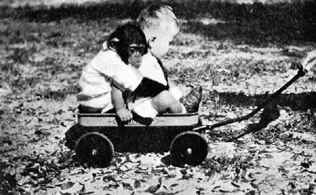 Cho con trai và tinh tinh ăn ngủ cùng nhau để phục vụ thí nghiệm, nhà khoa học hốt hoảng chấm dứt mọi thứ sau 9 tháng khi phát hiện ra sự thật kinh hoàng - Ảnh 5.