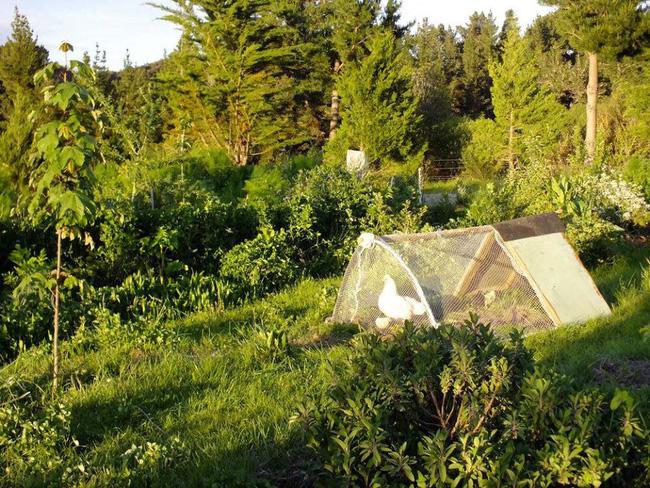 Cặp vợ chồng sống một đời hạnh phúc bên khu vườn sinh thái tự tạo - Ảnh 4.