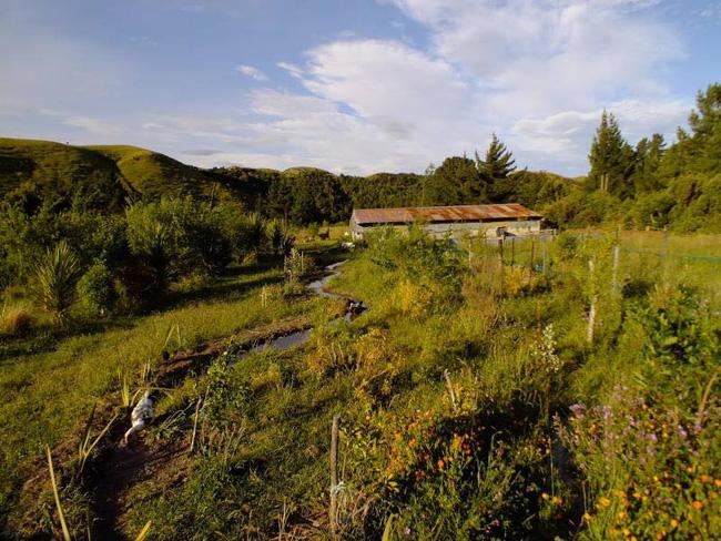 Cặp vợ chồng sống một đời hạnh phúc bên khu vườn sinh thái tự tạo - Ảnh 3.