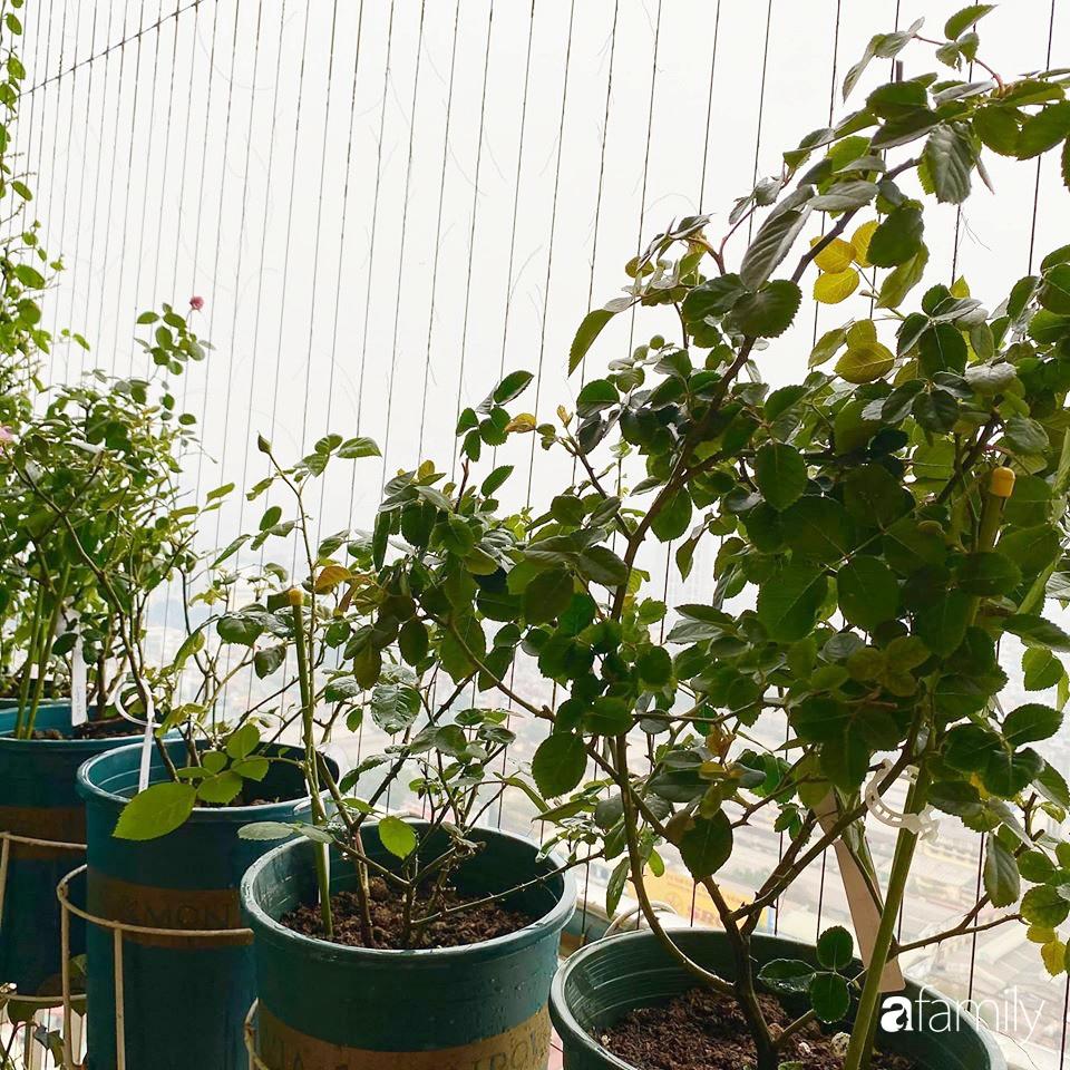 Mẹo hay của mẹ trẻ Hà Nội giúp bạn tự mua phụ kiện tạo vườn hồng đẹp mê ly ở ban công - Ảnh 9.