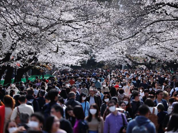 Bỏ ngoài tai những khuyến cáo về dịch bệnh Covid-19, hàng ngàn người dân Nhật vẫn tụ tập ngắm hoa anh đào và xem kickboxing - Ảnh 2.