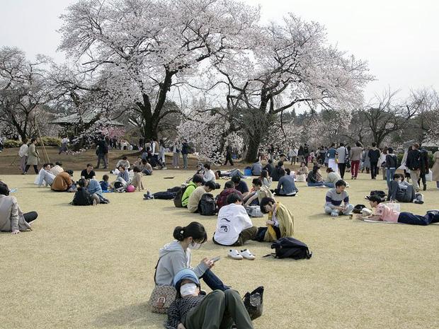 Bỏ ngoài tai những khuyến cáo về dịch bệnh Covid-19, hàng ngàn người dân Nhật vẫn tụ tập ngắm hoa anh đào và xem kickboxing - Ảnh 4.