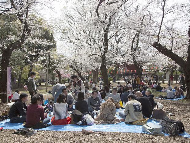Bỏ ngoài tai những khuyến cáo về dịch bệnh Covid-19, hàng ngàn người dân Nhật vẫn tụ tập ngắm hoa anh đào và xem kickboxing - Ảnh 5.