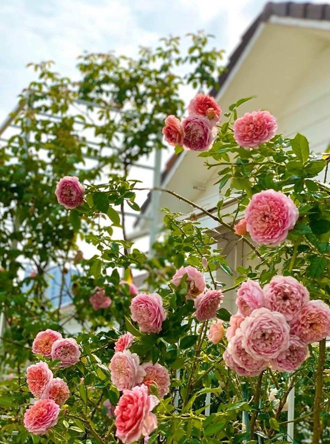 Bà xã Quyền Linh khoe thành quả thu hoạch hoa trái sai trĩu trong căn biệt thự 21 tỷ, được cả chồng lẫn 2 cô con gái xinh đẹp phụ giúp - Ảnh 17.