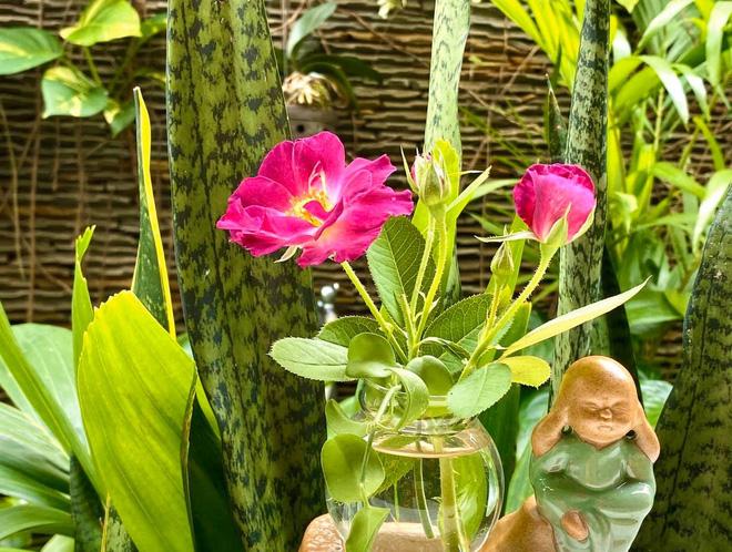 Bà xã Quyền Linh khoe thành quả thu hoạch hoa trái sai trĩu trong căn biệt thự 21 tỷ, được cả chồng lẫn 2 cô con gái xinh đẹp phụ giúp - Ảnh 19.