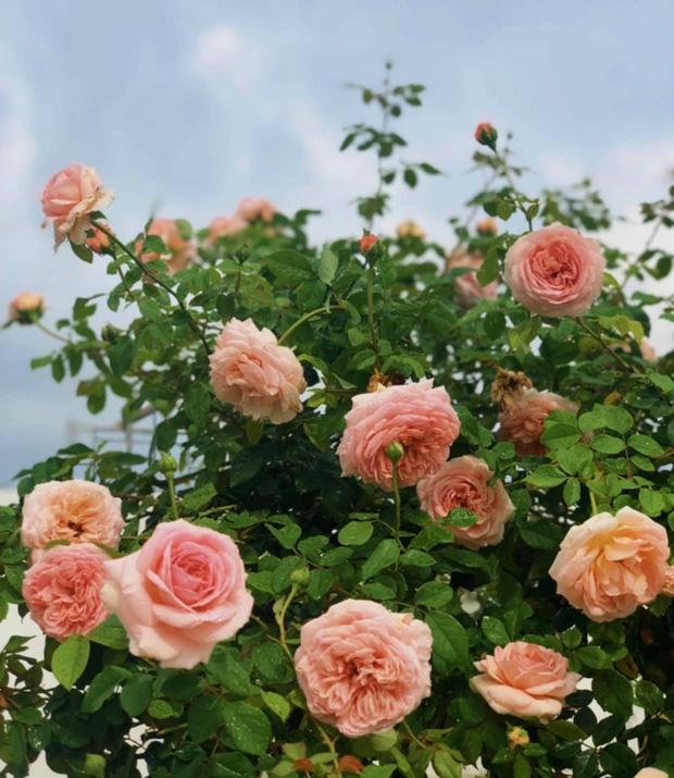 Bà xã MC Quyền Linh khoe vườn hoa, nhưng ai cũng dán mắt vào 2 cô con gái xinh đẹp, cao ráo như hoa hậu tương lai - Ảnh 3.