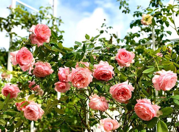 Bà xã MC Quyền Linh khoe vườn hoa, nhưng ai cũng dán mắt vào 2 cô con gái xinh đẹp, cao ráo như hoa hậu tương lai - Ảnh 4.