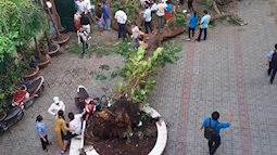 Công ty cây xanh nói gì sau sự cố cây bật gốc đè học sinh tử vong tại TP.HCM?