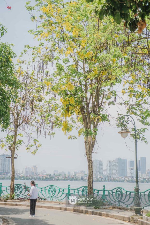 Hồ Tây rất chill những ngày này: dân tình đua nhau check-in với Muồng Hoàng Yến, chiều hoàng hôn đông kín người tụ tập - Ảnh 2.