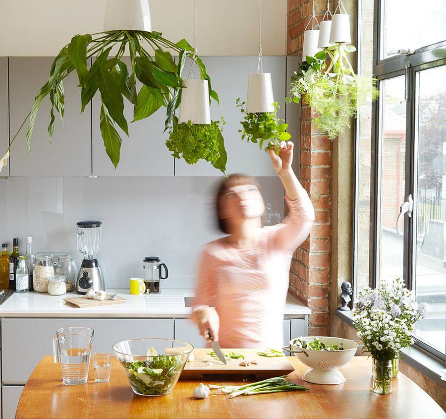 Những ý tưởng siêu hữu ích tạo góc xanh đẹp mắt với đủ loại cây gia vị và thảo mộc cho góc bếp thêm tươi mát chào hè - Ảnh 1.