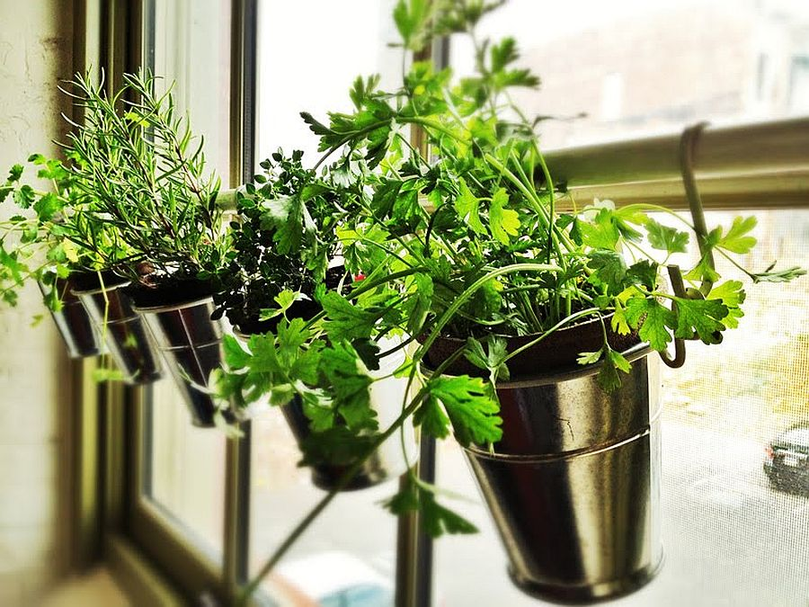 Những ý tưởng siêu hữu ích tạo góc xanh đẹp mắt với đủ loại cây gia vị và thảo mộc cho góc bếp thêm tươi mát chào hè - Ảnh 2.