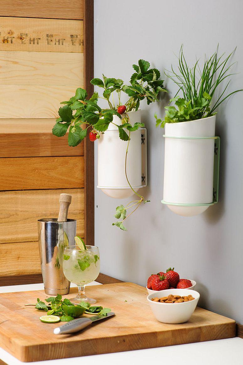 Những ý tưởng siêu hữu ích tạo góc xanh đẹp mắt với đủ loại cây gia vị và thảo mộc cho góc bếp thêm tươi mát chào hè - Ảnh 4.