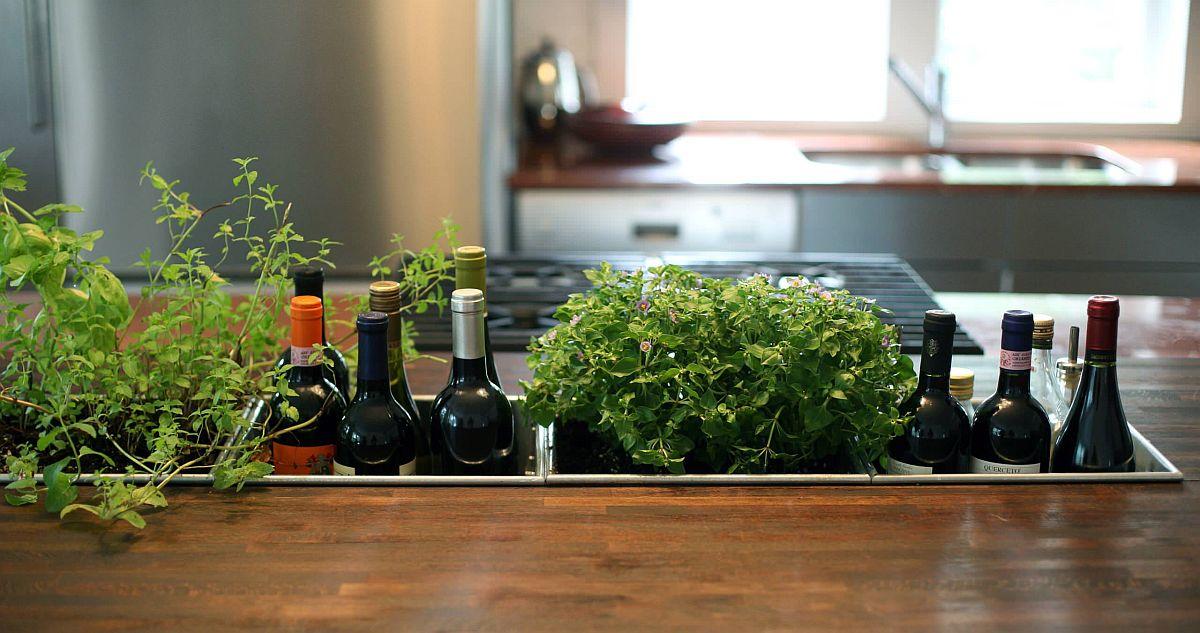 Những ý tưởng siêu hữu ích tạo góc xanh đẹp mắt với đủ loại cây gia vị và thảo mộc cho góc bếp thêm tươi mát chào hè - Ảnh 6.