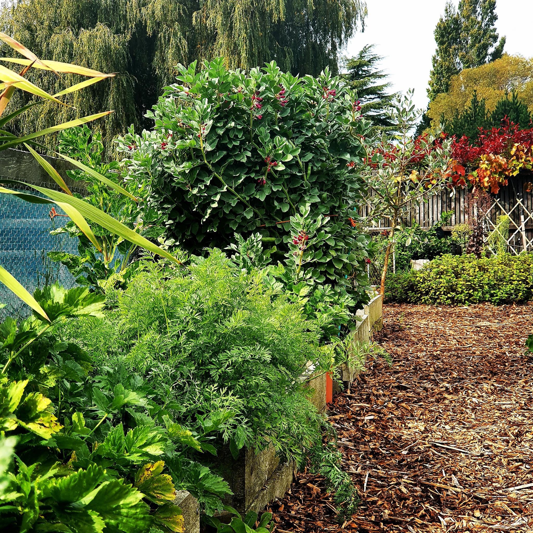 Khu vườn 225m² trồng toàn rau hữu cơ xanh tốt nhờ bí quyết dễ làm của bà mẹ trẻ đảm đang - Ảnh 8.