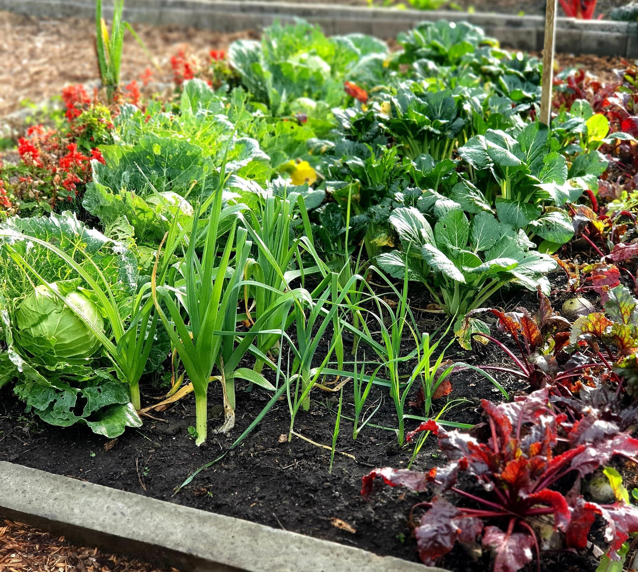 Khu vườn 225m² trồng toàn rau hữu cơ xanh tốt nhờ bí quyết dễ làm của bà mẹ trẻ đảm đang - Ảnh 5.