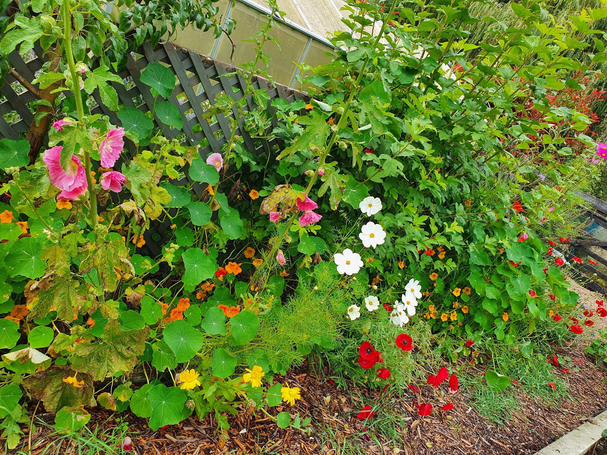 Khu vườn 225m² trồng toàn rau hữu cơ xanh tốt nhờ bí quyết dễ làm của bà mẹ trẻ đảm đang - Ảnh 6.
