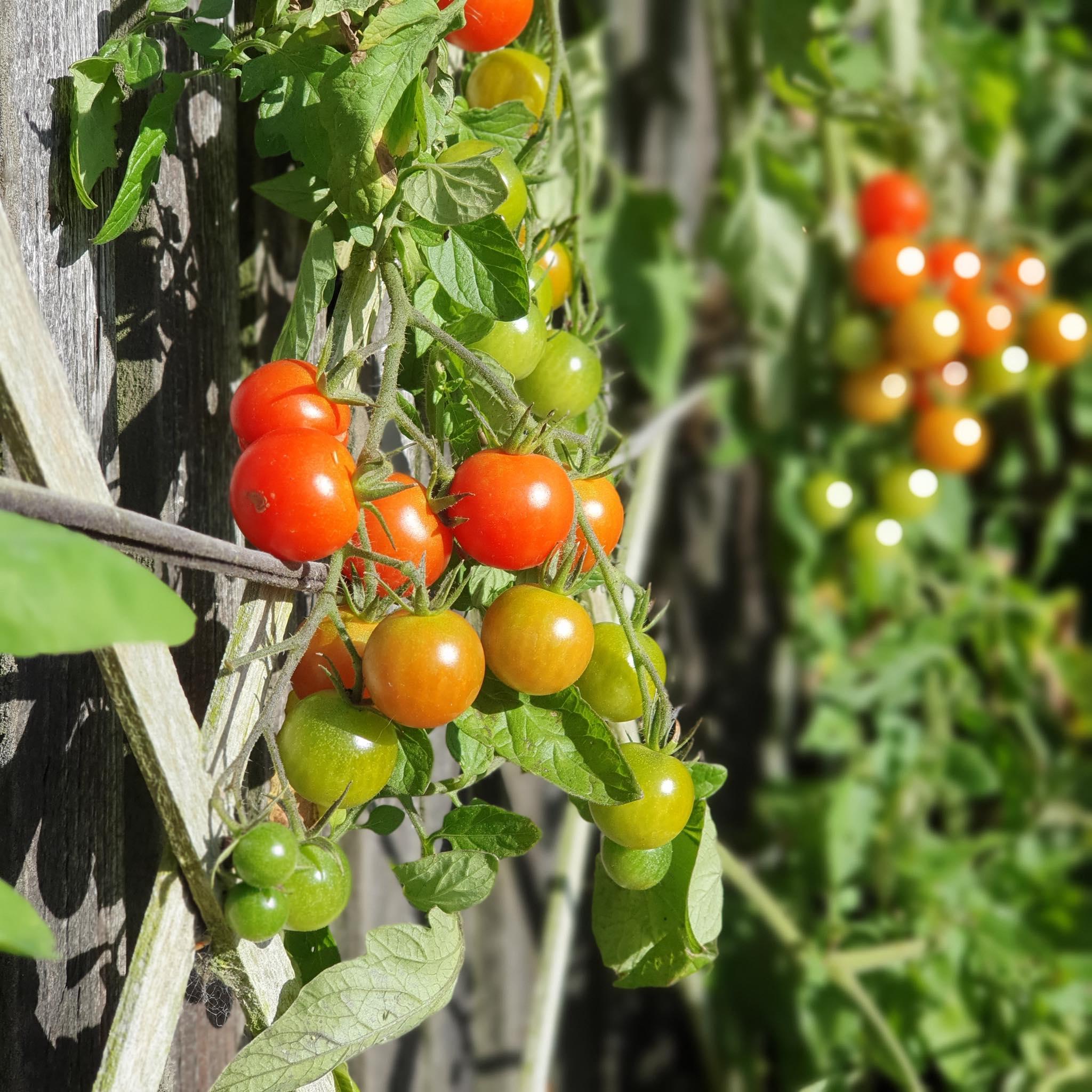 Khu vườn 225m² trồng toàn rau hữu cơ xanh tốt nhờ bí quyết dễ làm của bà mẹ trẻ đảm đang - Ảnh 11.