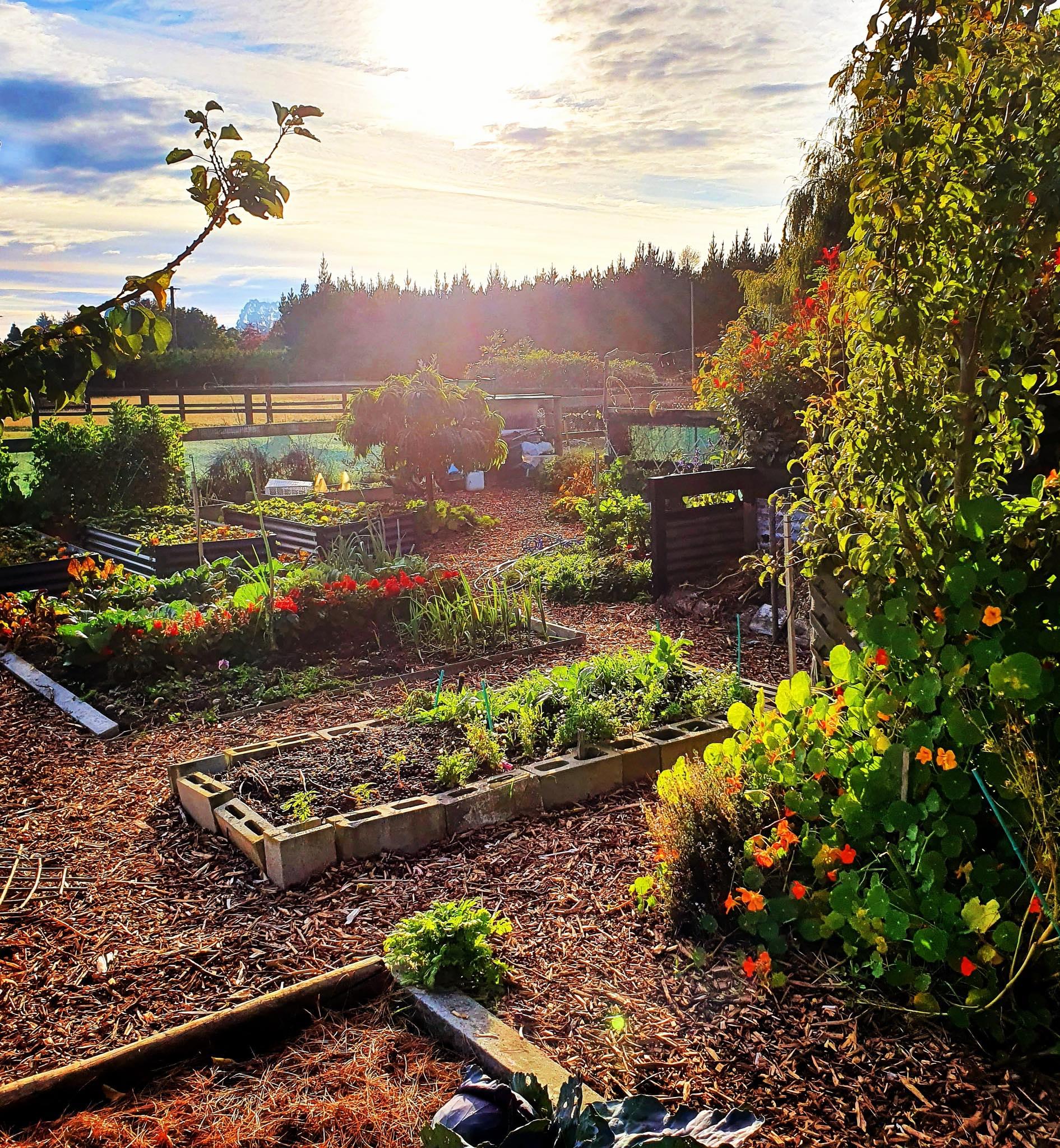Khu vườn 225m² trồng toàn rau hữu cơ xanh tốt nhờ bí quyết dễ làm của bà mẹ trẻ đảm đang - Ảnh 1.