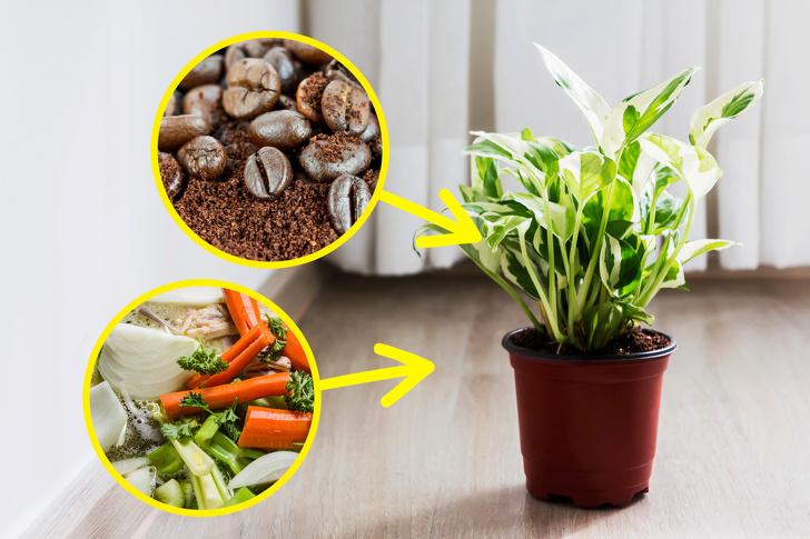 Những lời khuyên hiệu quả nhất giúp chăm sóc cây trồng trong nhà tốt tươi - Ảnh 6.