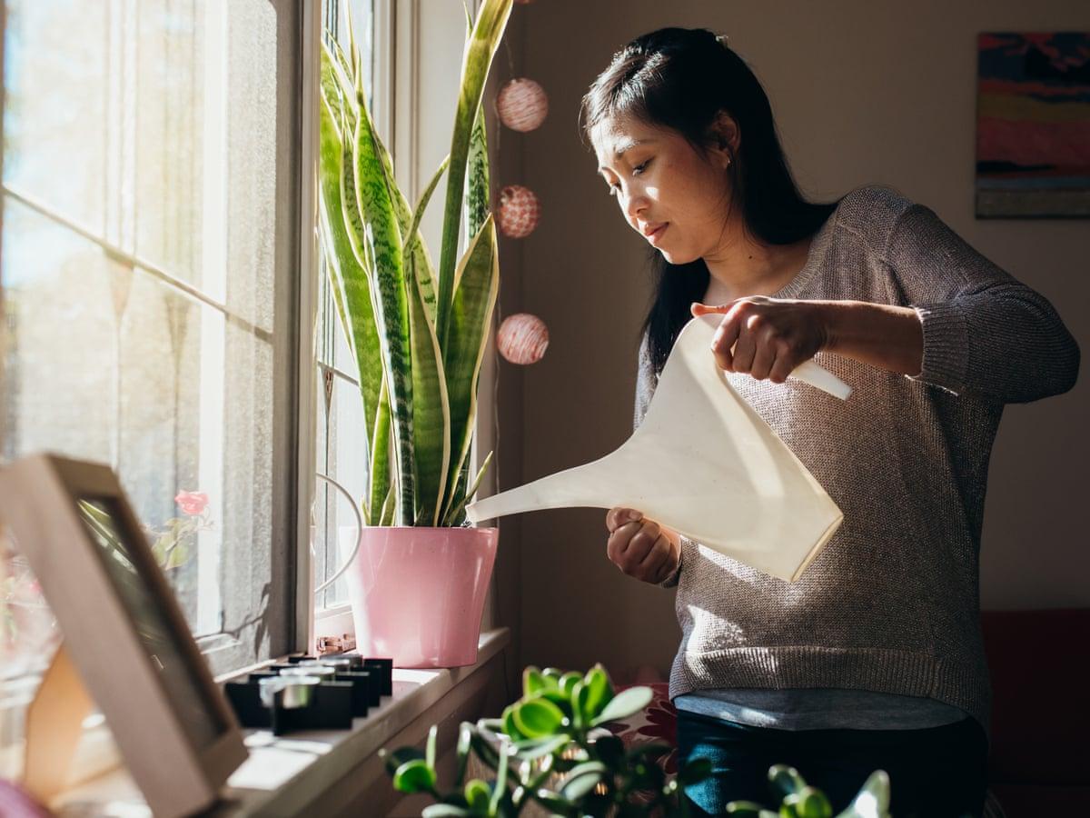 Những lời khuyên hiệu quả nhất giúp chăm sóc cây trồng trong nhà tốt tươi - Ảnh 3.