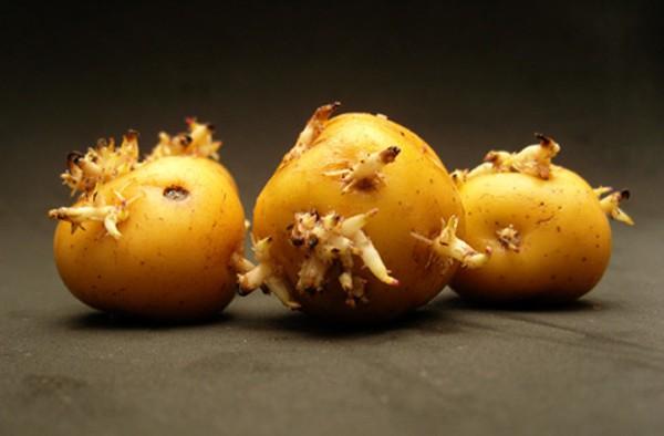 Những thực phẩm dễ bị nhiễm độc - Ảnh 2.