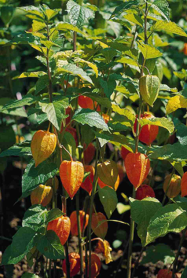 10 loại quả hiếm có khó tìm nhất thế giới nhưng Việt Nam đã có 4 trong số đó, còn mọc nhiều là đằng khác - Ảnh 4.