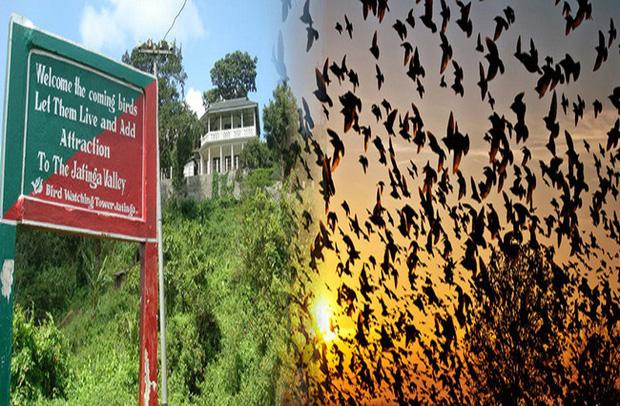 Chuyện rùng rợn về ngôi làng bí ẩn nơi có hàng ngàn con chim bay đến tự sát, 100 năm qua vẫn khiến khoa học đau đầu đi tìm lời giải - Ảnh 1.