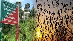 """Chuyện rùng rợn về ngôi làng bí ẩn nơi có hàng ngàn con chim bay đến """"tự sát"""", 100 năm qua vẫn khiến khoa học đau đầu đi tìm lời giải"""