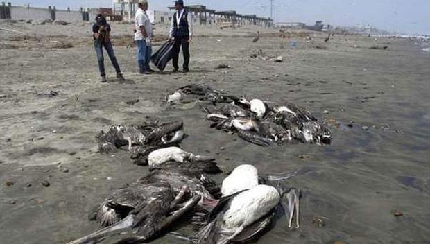 Chuyện rùng rợn về ngôi làng bí ẩn nơi có hàng ngàn con chim bay đến tự sát, 100 năm qua vẫn khiến khoa học đau đầu đi tìm lời giải - Ảnh 4.