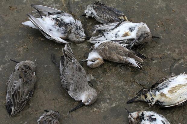Chuyện rùng rợn về ngôi làng bí ẩn nơi có hàng ngàn con chim bay đến tự sát, 100 năm qua vẫn khiến khoa học đau đầu đi tìm lời giải - Ảnh 5.
