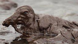 Loạt ảnh khiến bất kỳ ai nhìn thấy cũng ám ảnh về sức ảnh hưởng kinh hoàng của ô nhiễm môi trường đối với các loài động vật