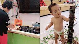 Bà bận nấu ăn trong bếp, quay ra đã thấy cháu xử lý chậu cây cảnh trụi sạch không còn 1 chiếc lá