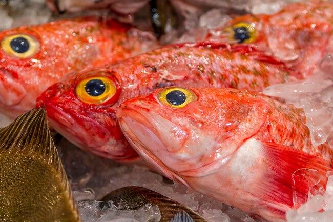 Cá - loại giàu omega-3, loại chứa độc tố: Cá hồi, rô phi, cá thu, cá ngừ... thuộc loại nào? - Ảnh 5.