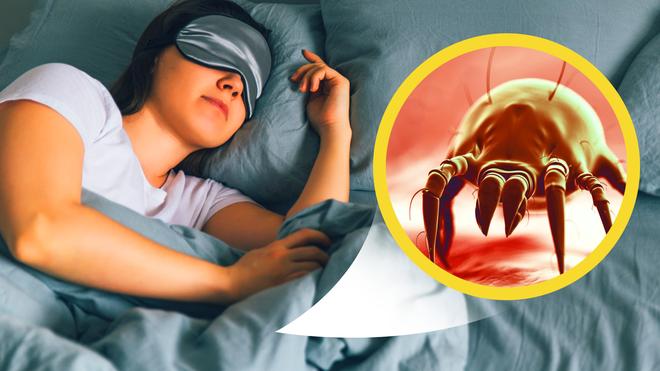 1 kg da chết và hàng trăm nghìn ve bụi: Hiểm họa không ngờ ẩn náu trên giường ngủ và cách tiêu diệt - Ảnh 2.