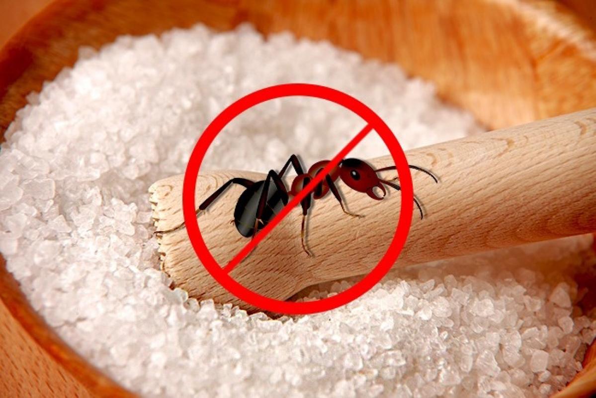 12 mẹo nhỏ cực hữu ích từ muối có thể bạn chưa biết - Ảnh 8.