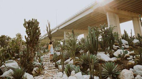 """Xôn xao địa điểm check-in """"ngàn like"""" mới toanh tại Hà Nội: Khu vườn xương rồng đẹp chẳng khác nào Đà Lạt"""