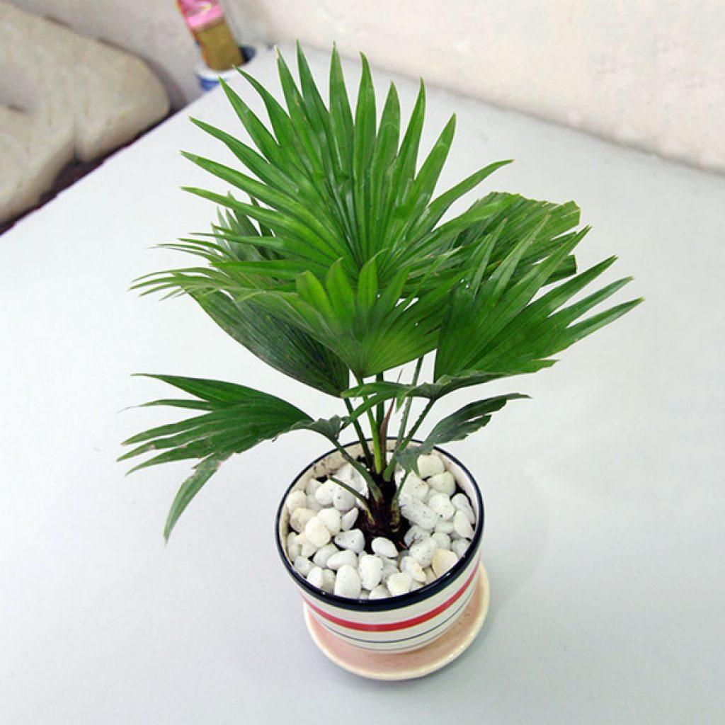 Những loại cây cảnh trồng trong nhà vừa sang trọng vừa dễ trồng lại còn thu hút tài lộc - Ảnh 5.