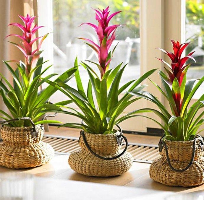 Những loại cây cảnh trồng trong nhà vừa sang trọng vừa dễ trồng lại còn thu hút tài lộc - Ảnh 6.