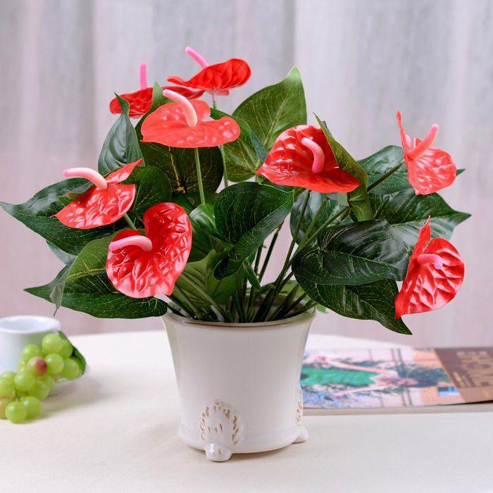 Những loại cây cảnh trồng trong nhà vừa sang trọng vừa dễ trồng lại còn thu hút tài lộc - Ảnh 7.