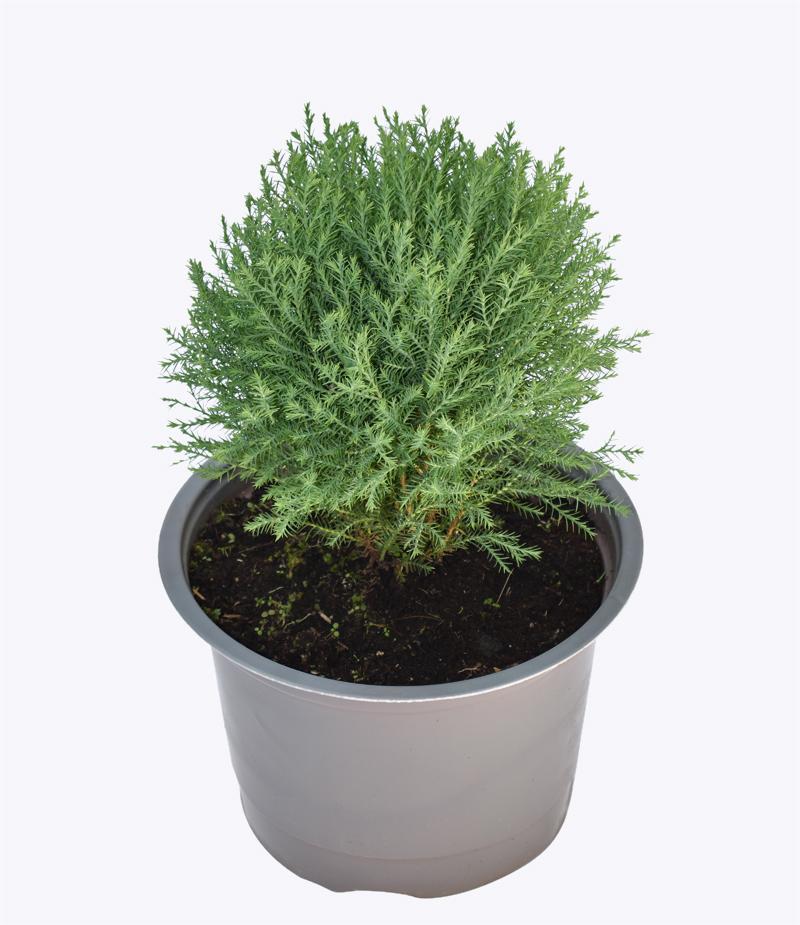 Những loại cây cảnh trồng trong nhà vừa sang trọng vừa dễ trồng lại còn thu hút tài lộc - Ảnh 2.