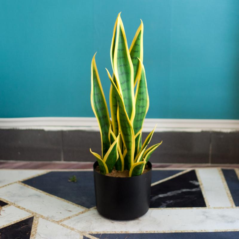 Những loại cây cảnh trồng trong nhà vừa sang trọng vừa dễ trồng lại còn thu hút tài lộc - Ảnh 1.
