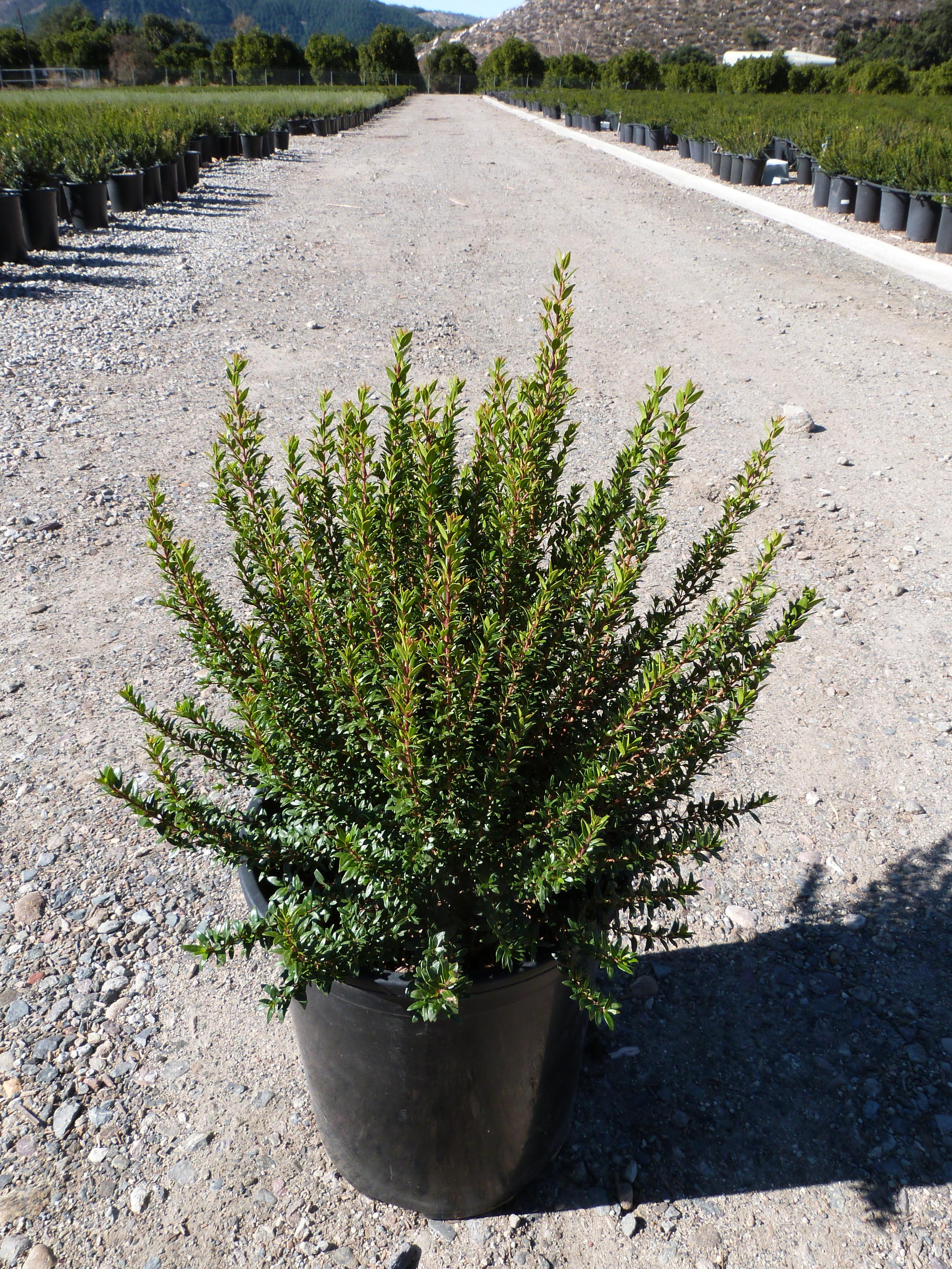 Những loại cây cảnh trồng trong nhà vừa sang trọng vừa dễ trồng lại còn thu hút tài lộc - Ảnh 4.