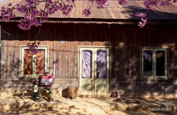 Choáng ngợp với cảnh hàng trăm cây hoa mai anh đào nở rợp trời ở ngôi làng đẹp lạ như Tây Tạng, nằm ngay gần trung tâm TP. Đà Lạt mà không phải ai cũng biết - Ảnh 7.