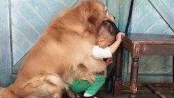 """Thấy cậu chủ bị bố dọa đánh, chú chó cưng đã đã lao đến và có một hành động khiến ai cũng """"lịm tim"""""""