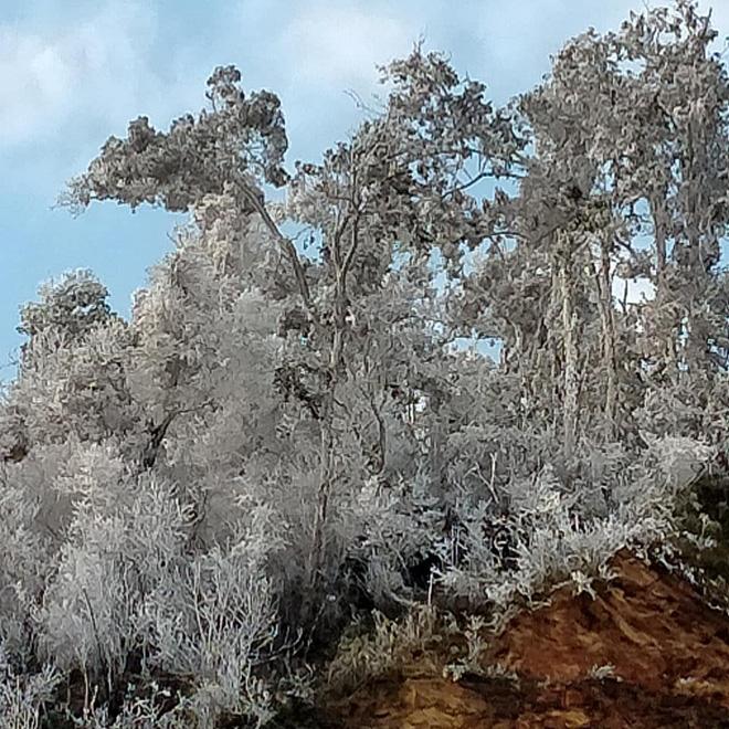 Nhiều nơi ở Nghệ An xuất hiện băng giá, cây cối, vật dụng đều bị đóng băng - Ảnh 1.