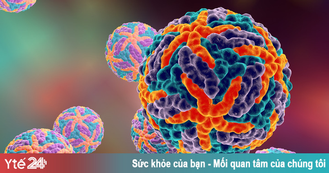 Phát hiện kháng thể ngăn chặn sự lây lan của virus sốt xuất huyết - Ảnh 1.