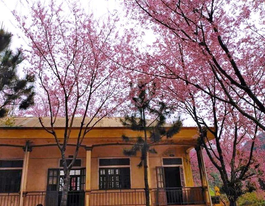 Nghệ An: Hoa đào, hoa mận nở bung tuyệt đẹp trong giá rét trước khi Tết về - Ảnh 13.
