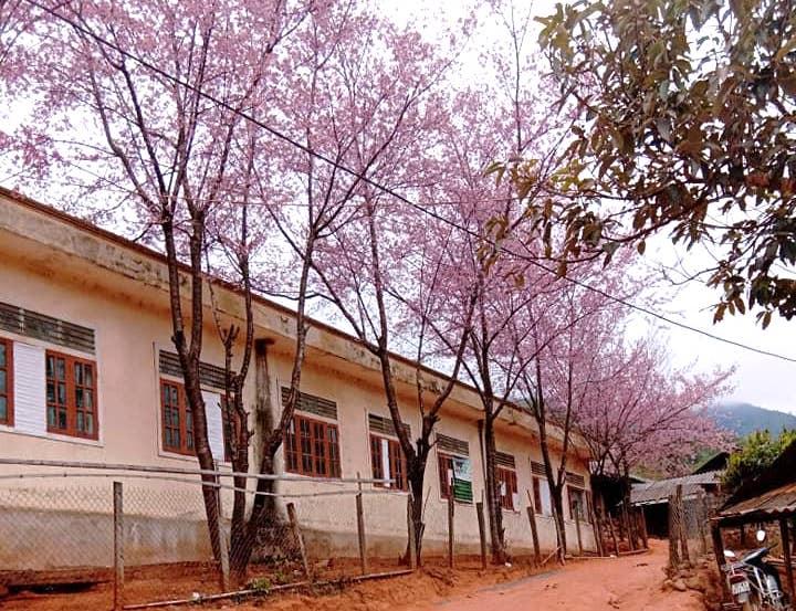 Nghệ An: Hoa đào, hoa mận nở bung tuyệt đẹp trong giá rét trước khi Tết về - Ảnh 11.