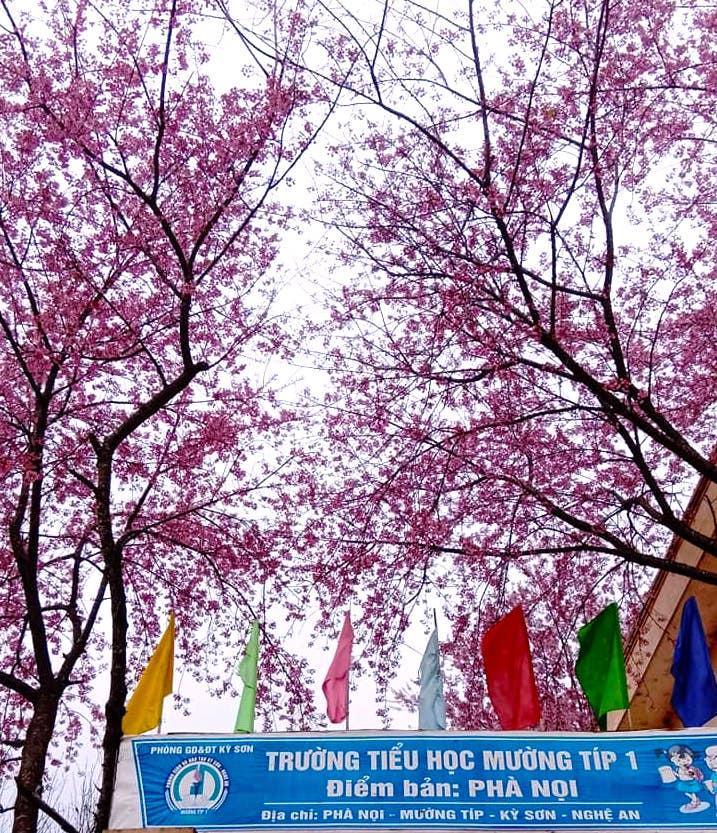 Nghệ An: Hoa đào, hoa mận nở bung tuyệt đẹp trong giá rét trước khi Tết về - Ảnh 12.